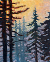Pacific Firs 8x10